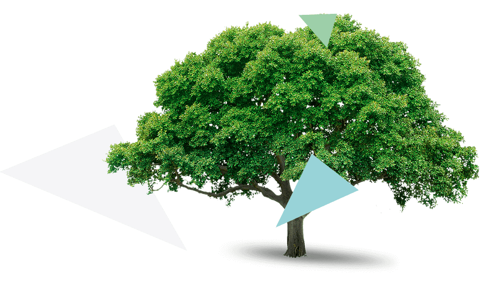 Zahradní architekt - Anežka Stejskalová. Návrhy a realizace zahrady pro rodinné domy, terasy, městské zástavby, zeleň interiérů a střešní zahrady.